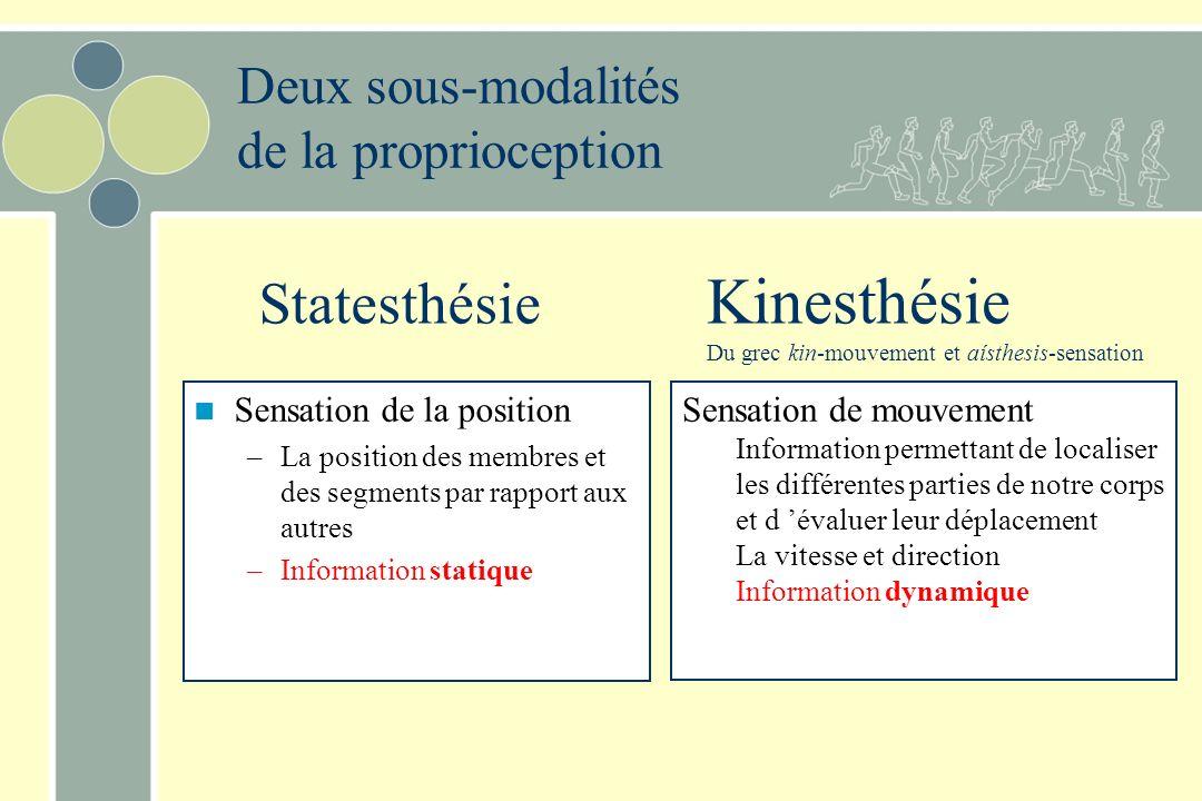 Kinesthésie Statesthésie Deux sous-modalités de la proprioception
