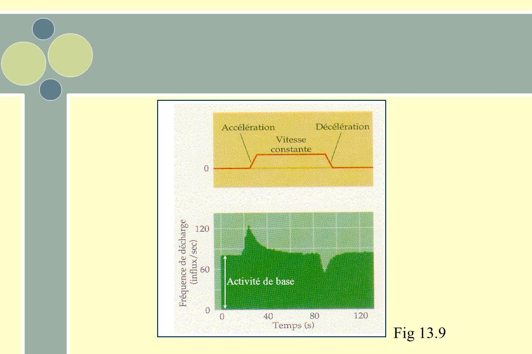 Activité de base Fig 13.9