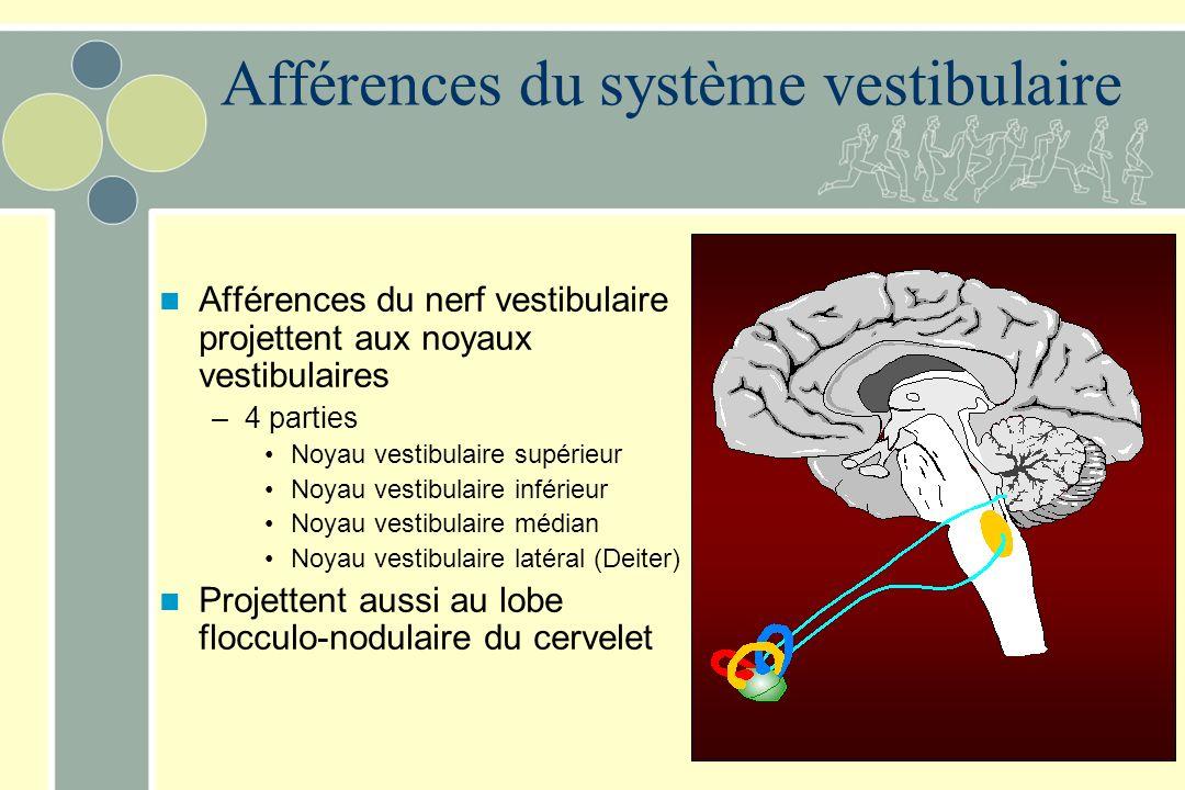 Afférences du système vestibulaire