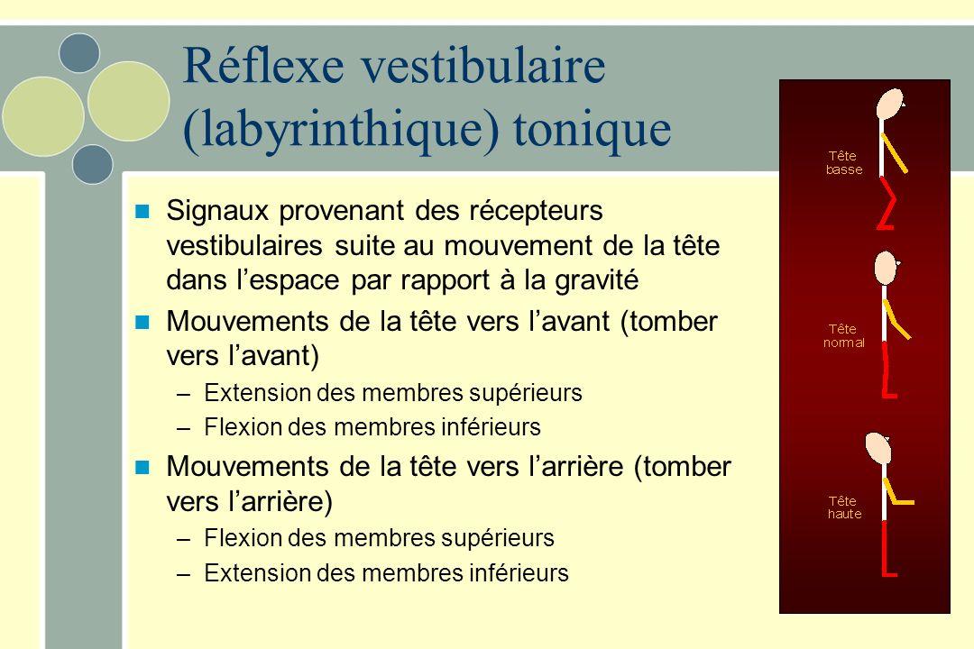 Réflexe vestibulaire (labyrinthique) tonique
