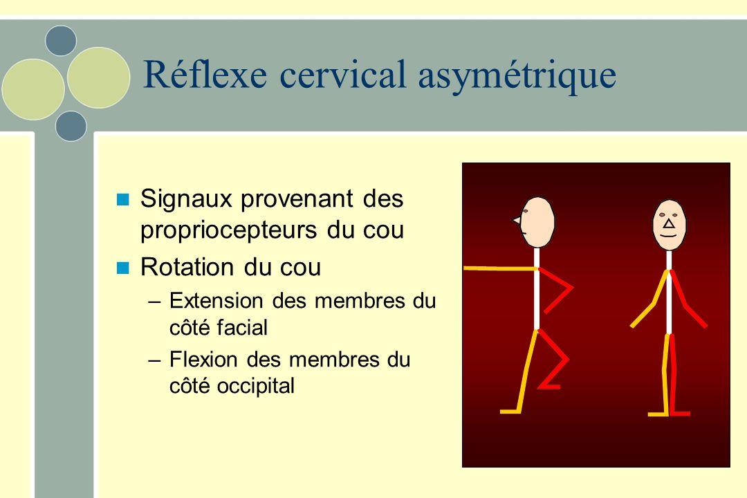 Réflexe cervical asymétrique