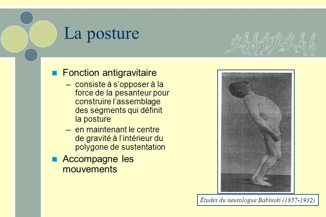 La posture Fonction antigravitaire Accompagne les mouvements