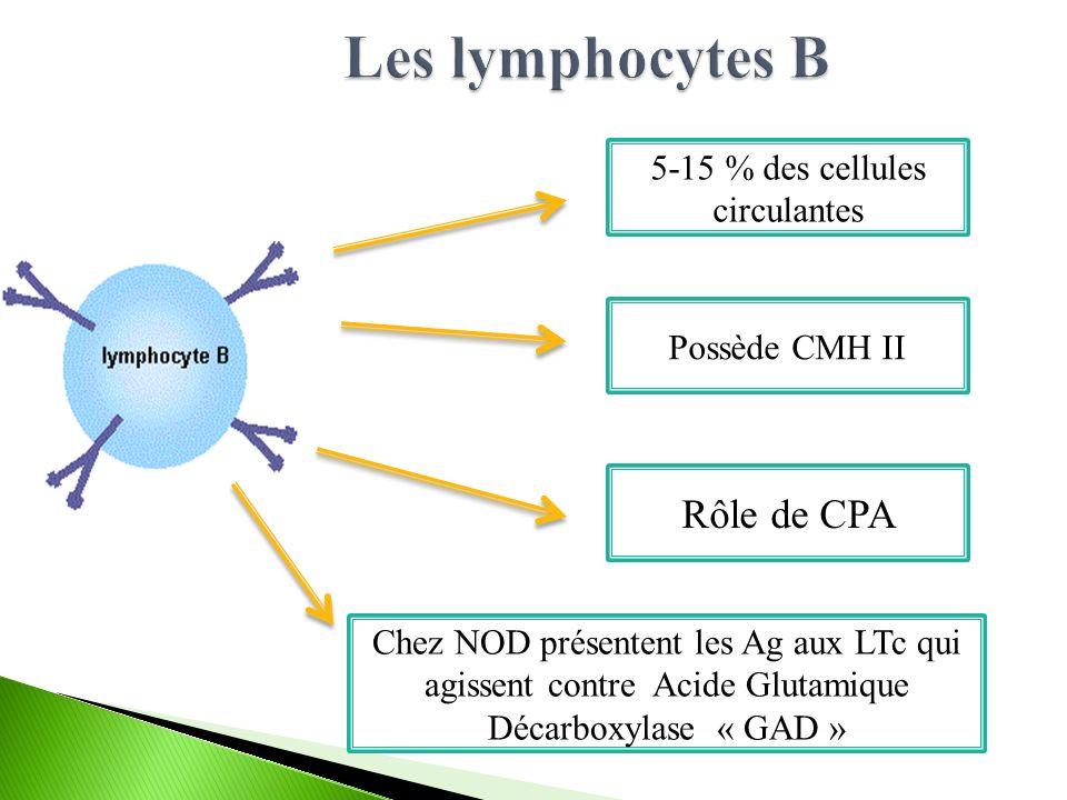 5-15 % des cellules circulantes