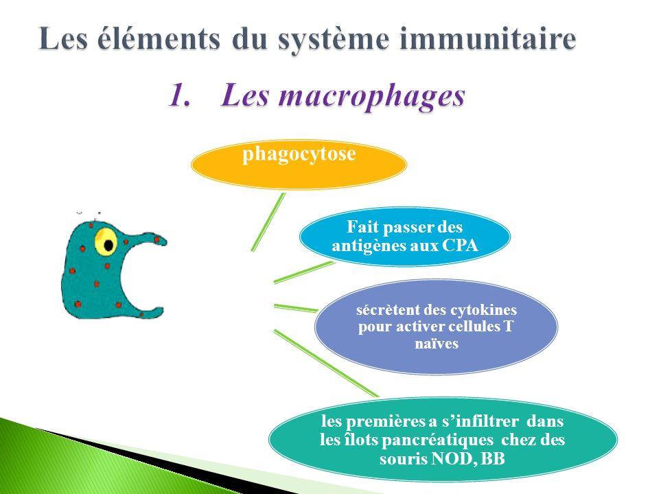 Les éléments du système immunitaire