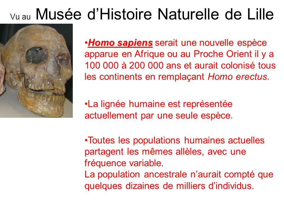 Vu au Musée d'Histoire Naturelle de Lille