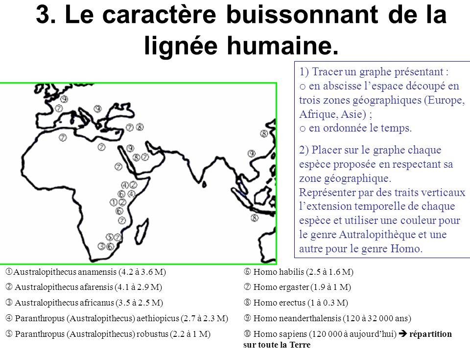 3. Le caractère buissonnant de la lignée humaine.
