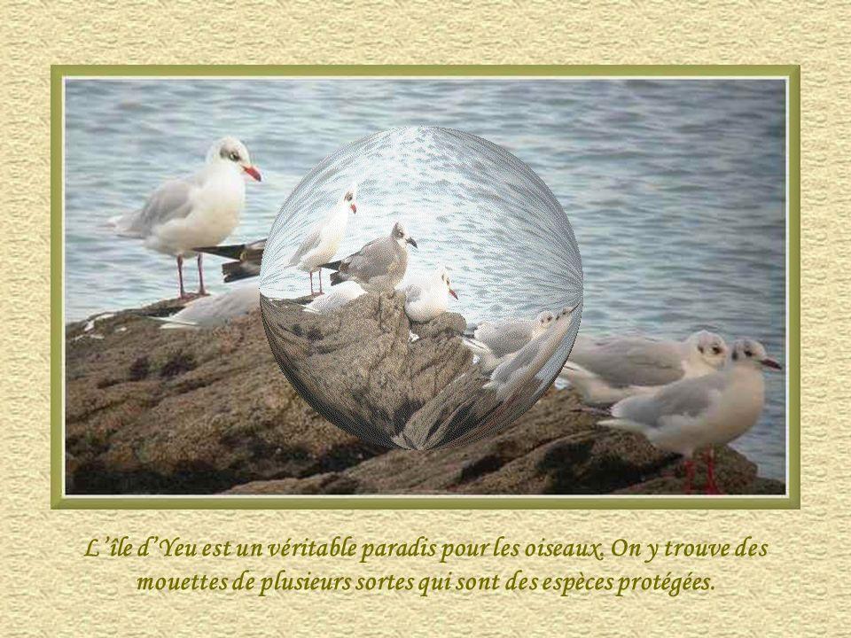L'île d'Yeu est un véritable paradis pour les oiseaux