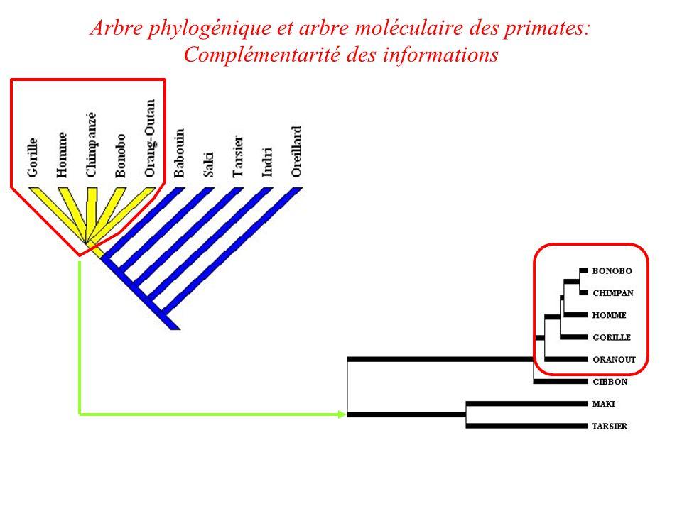 Arbre phylogénique et arbre moléculaire des primates: Complémentarité des informations