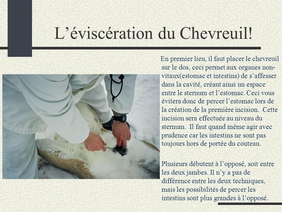 L'éviscération du Chevreuil!