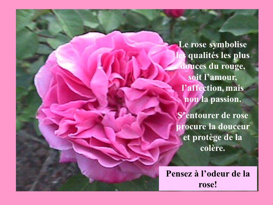 S'entourer de rose procure la douceur et protège de la colère.