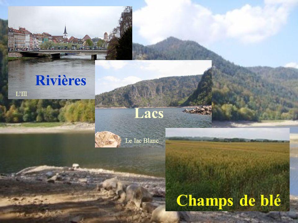 Rivières L'Ill Lacs Le lac Blanc Champs de blé