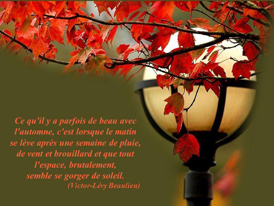 Ce qu il y a parfois de beau avec l automne, c est lorsque le matin