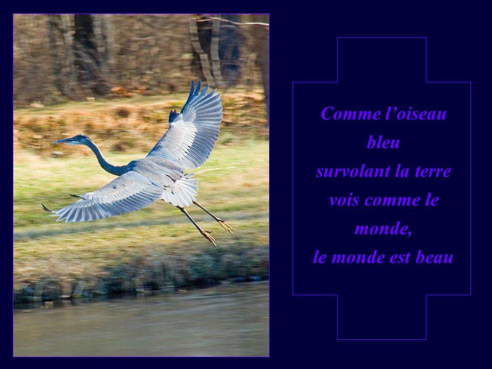 Comme l'oiseau bleu survolant la terre vois comme le monde, le monde est beau