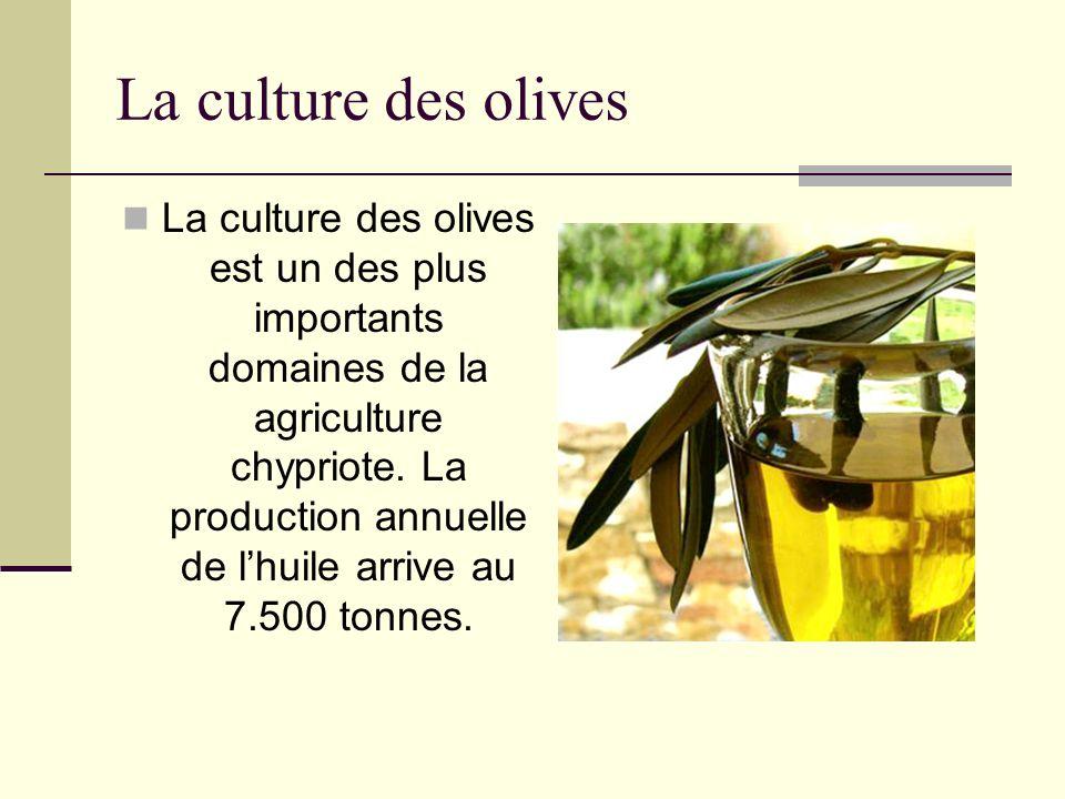 La culture des olives