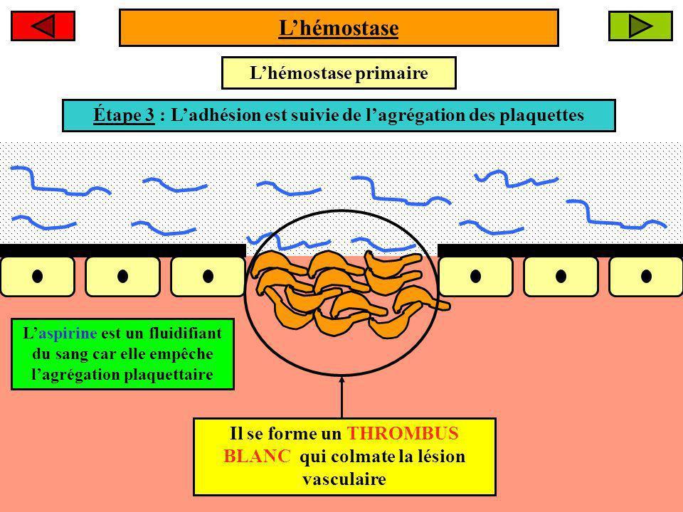 L'hémostase L'hémostase primaire