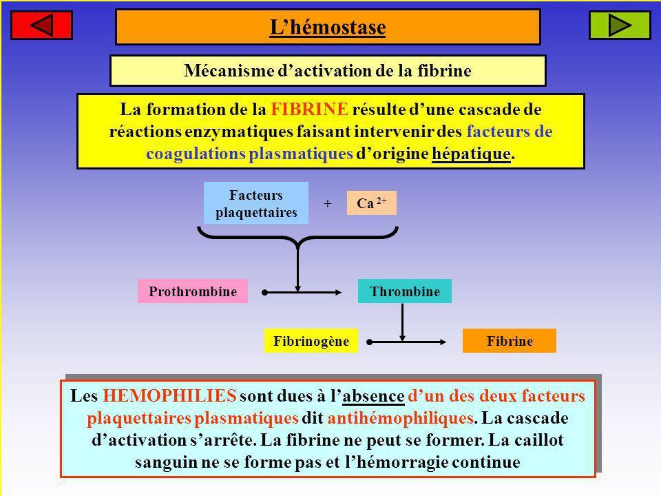 Mécanisme d'activation de la fibrine Facteurs plaquettaires