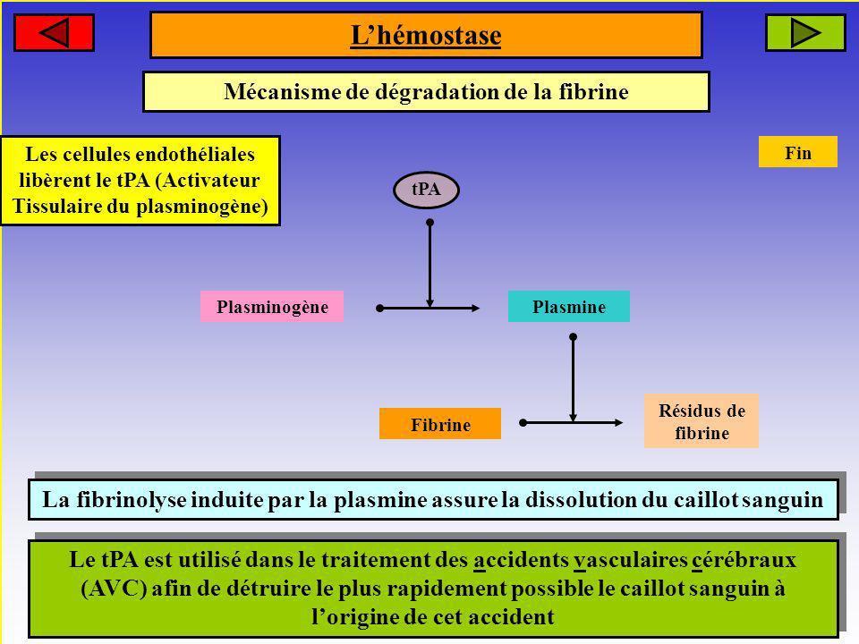 Mécanisme de dégradation de la fibrine