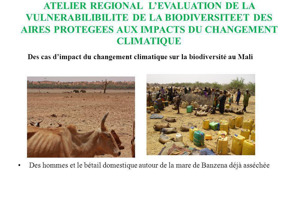 ATELIER REGIONAL L'EVALUATION DE LA VULNERABILIBILITE DE LA BIODIVERSITEET DES AIRES PROTEGEES AUX IMPACTS DU CHANGEMENT CLIMATIQUE