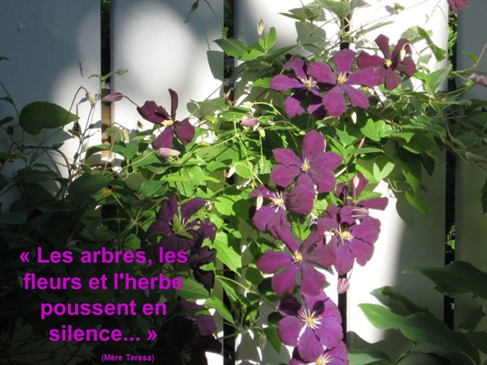 « Les arbres, les fleurs et l herbe poussent en silence... »