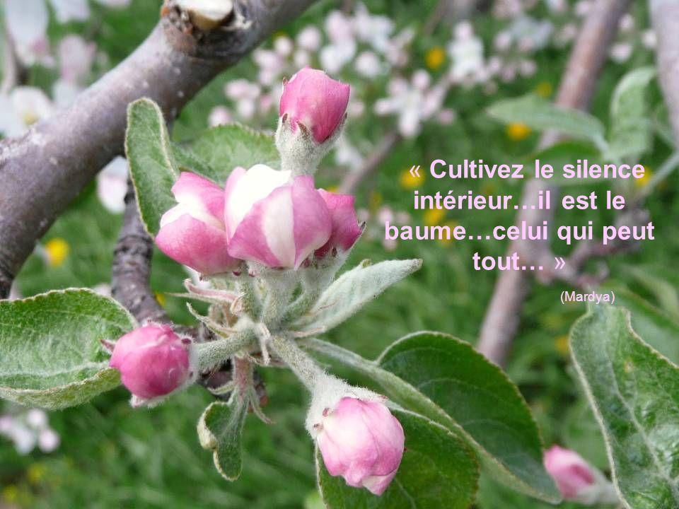 « Cultivez le silence intérieur…il est le baume…celui qui peut tout… »
