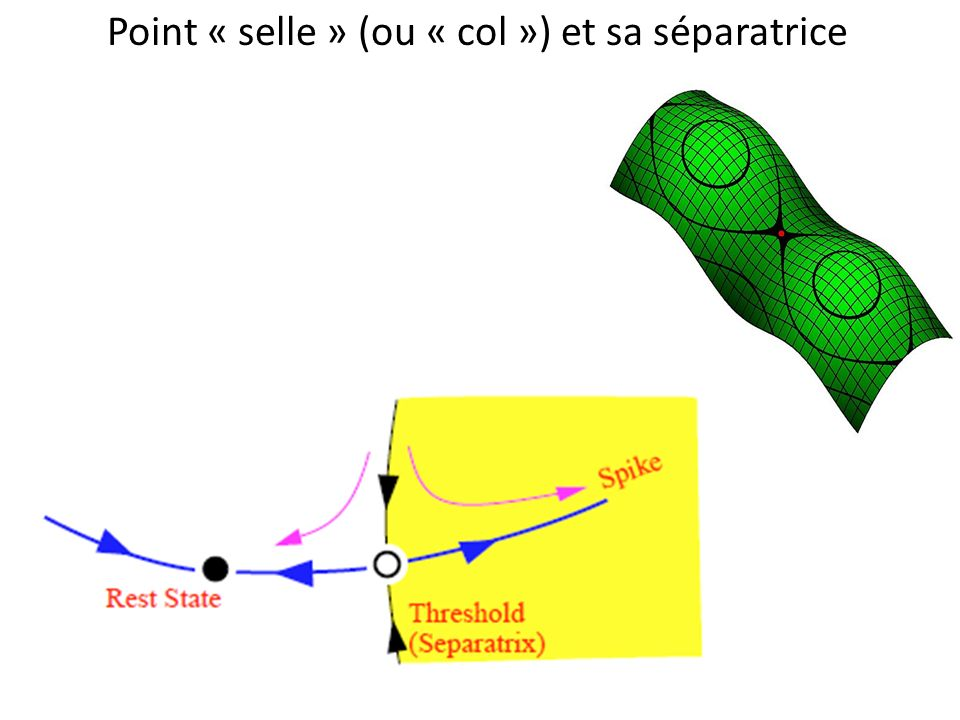 Point « selle » (ou « col ») et sa séparatrice