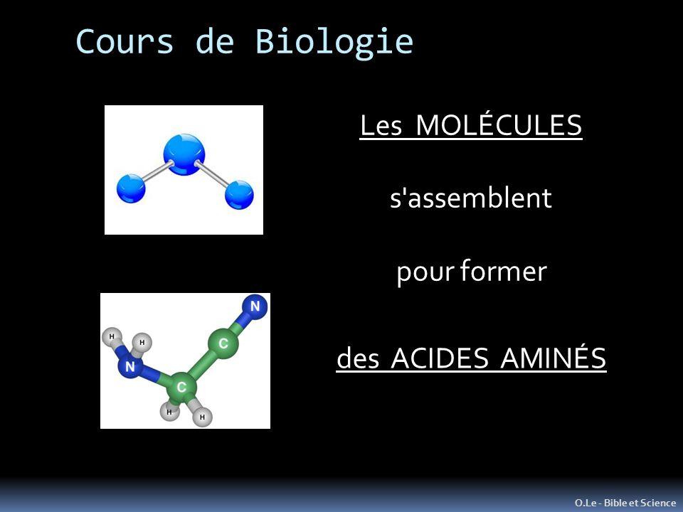 Cours de Biologie Les MOLÉCULES s assemblent pour former