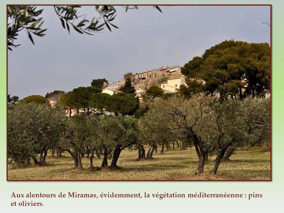 Aux alentours de Miramas, évidemment, la végétation méditerranéenne : pins et oliviers.