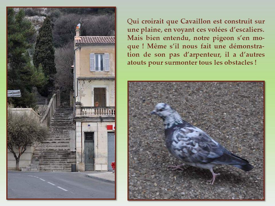 Qui croirait que Cavaillon est construit sur une plaine, en voyant ces volées d'escaliers.
