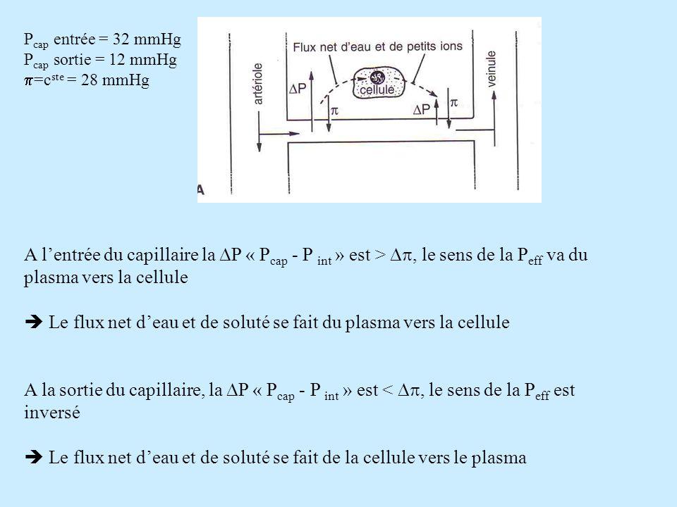  Le flux net d'eau et de soluté se fait du plasma vers la cellule