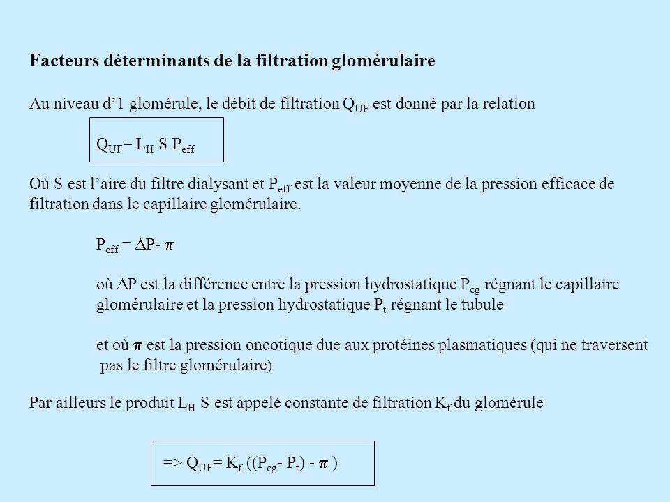 Facteurs déterminants de la filtration glomérulaire
