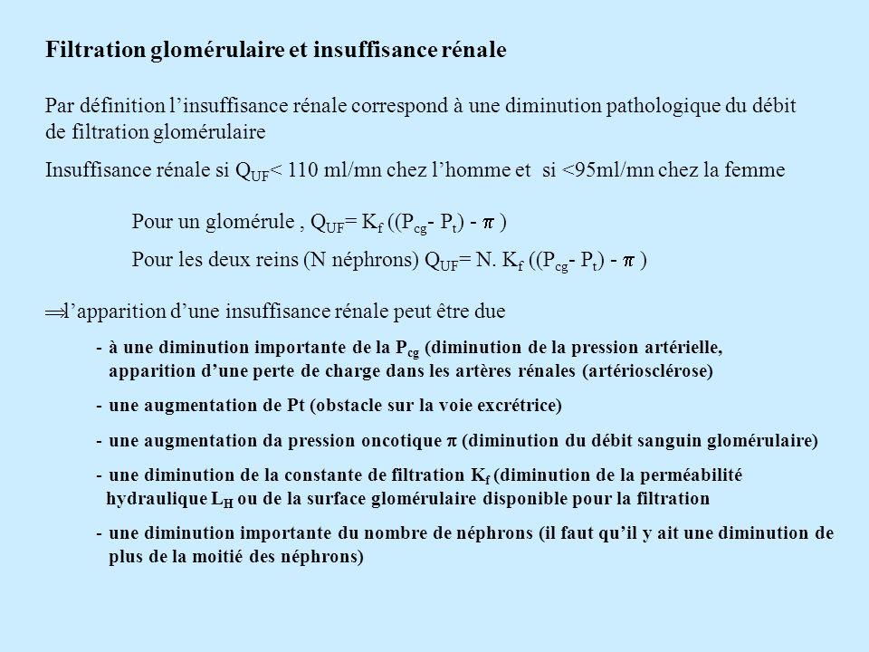 Filtration glomérulaire et insuffisance rénale