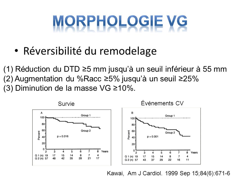 Morphologie VG Réversibilité du remodelage