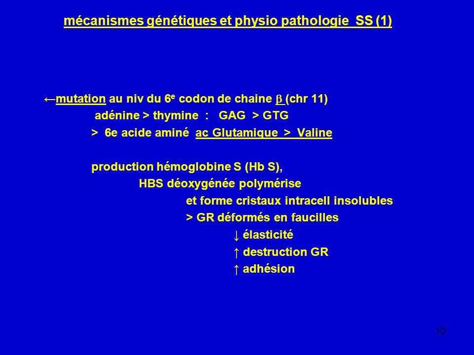 mécanismes génétiques et physio pathologie SS (1)