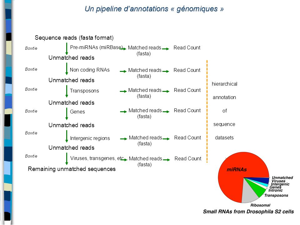 Un pipeline d'annotations « génomiques »