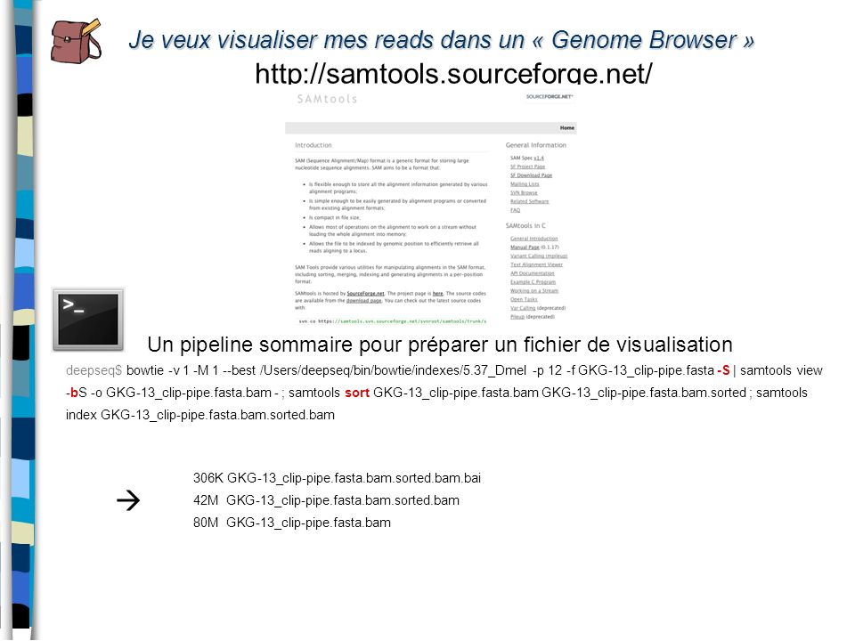 Je veux visualiser mes reads dans un « Genome Browser »