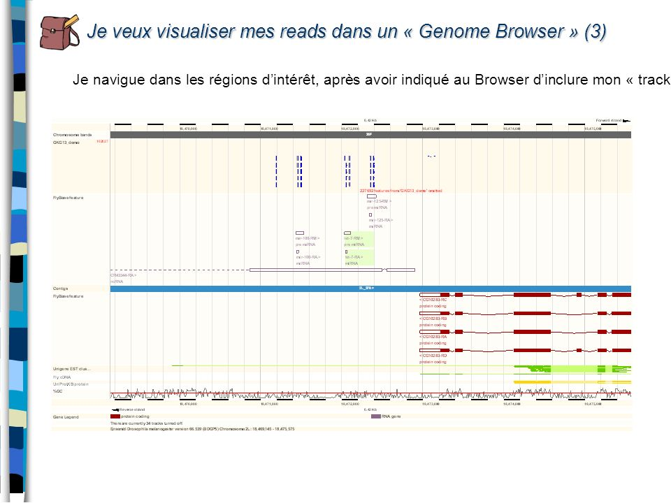 Je veux visualiser mes reads dans un « Genome Browser » (3)