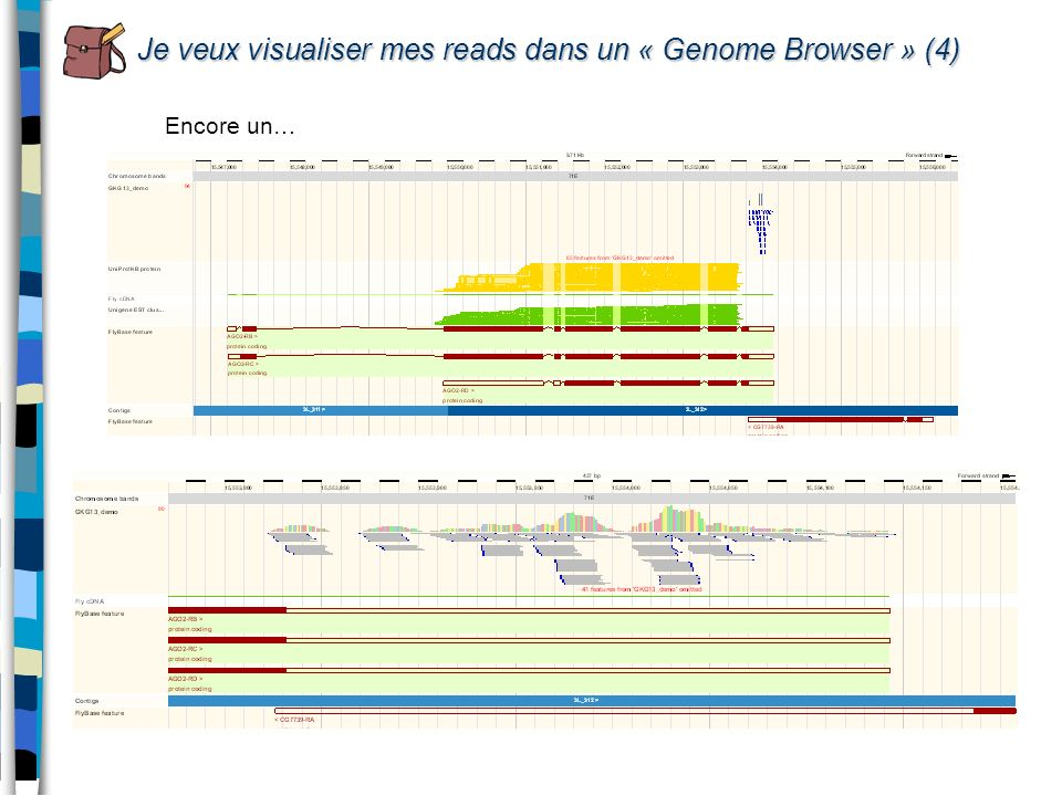 Je veux visualiser mes reads dans un « Genome Browser » (4)