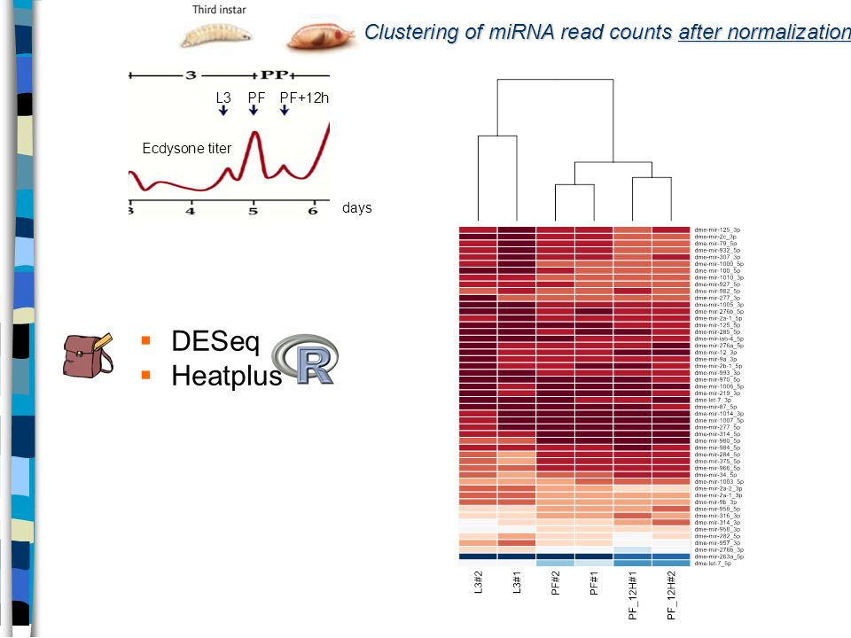 Clustering of miRNA read counts after normalization