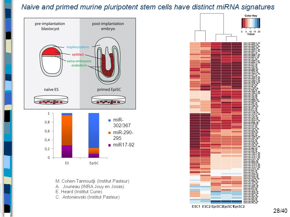 Naive and primed murine pluripotent stem cells have distinct miRNA signatures