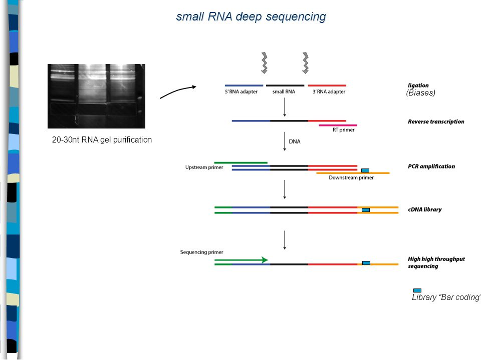 small RNA deep sequencing