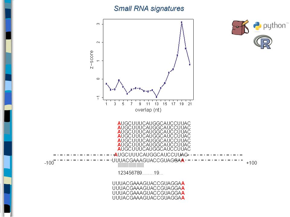 Small RNA signatures AUGCUUUCAUGGCAUCCUUAC UUUACGAAAGUACCGUAGGAA -100