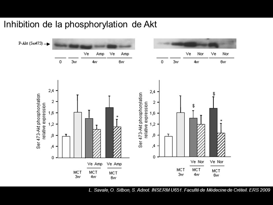 Inhibition de la phosphorylation de Akt