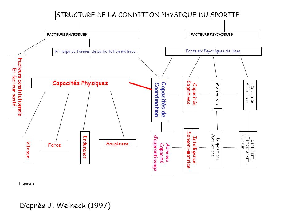 STRUCTURE DE LA CONDITION PHYSIQUE DU SPORTIF