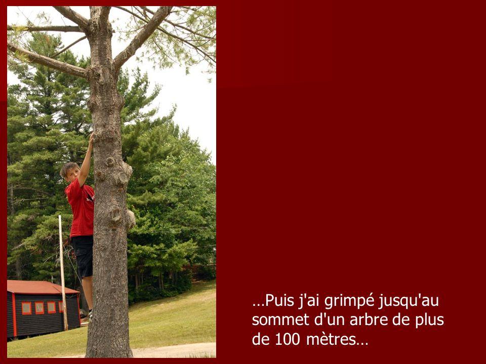 …Puis j ai grimpé jusqu au sommet d un arbre de plus de 100 mètres…