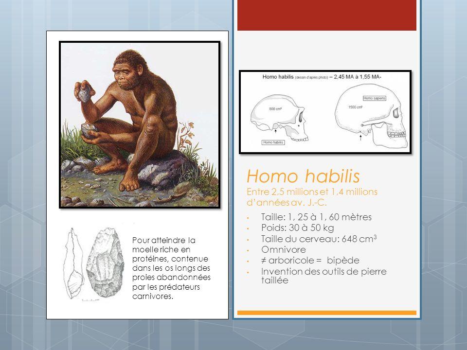 Homo habilis Entre 2,5 millions et 1,4 millions d'années av. J.-C.