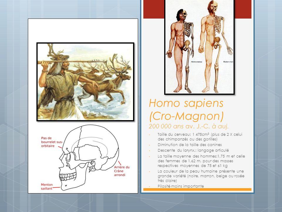 Homo sapiens (Cro-Magnon) 200 000 ans av. J.-C. à auj.