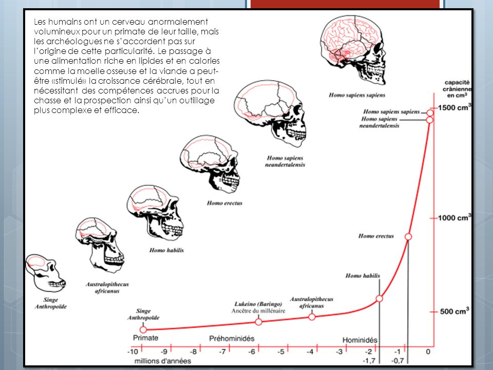 Les humains ont un cerveau anormalement volumineux pour un primate de leur taille, mais les archéologues ne s'accordent pas sur l'origine de cette particularité.