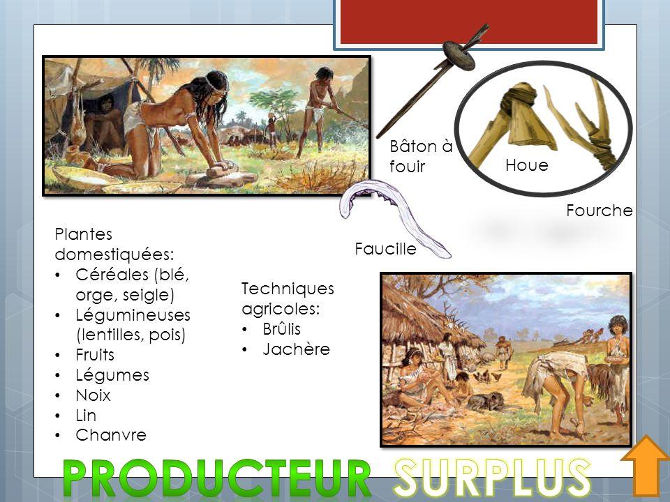 PRODUCTEUR SURPLUS Bâton à fouir Houe Fourche Plantes domestiquées:
