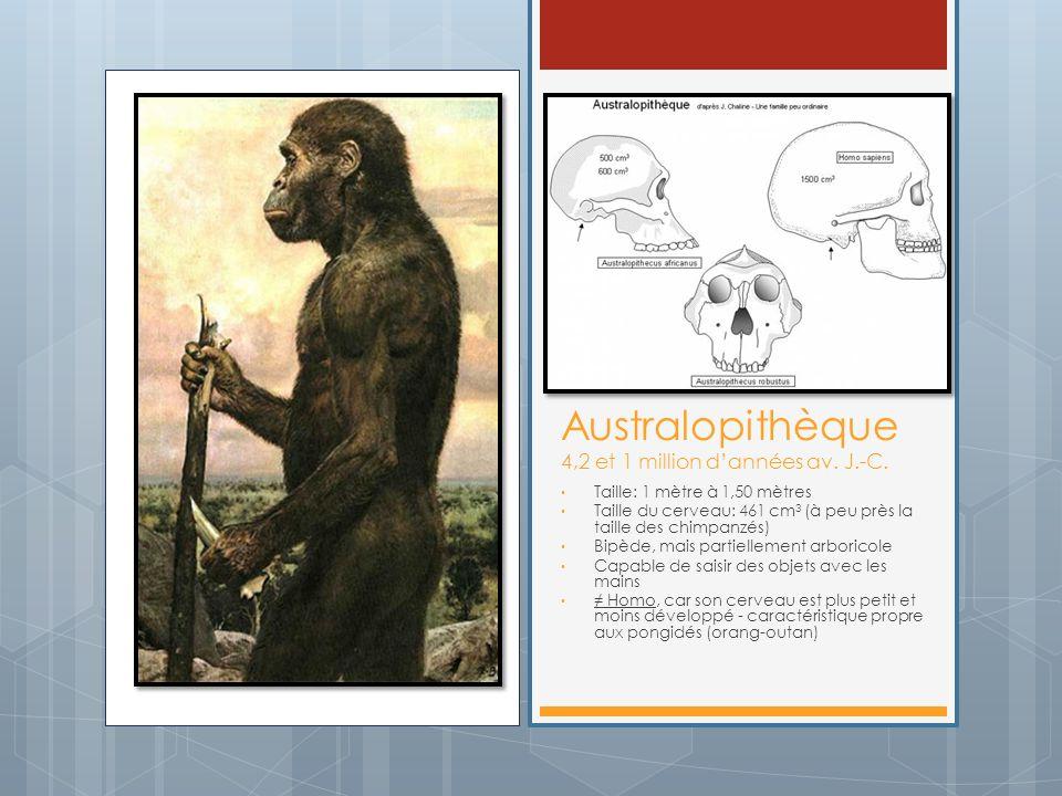 Australopithèque 4,2 et 1 million d'années av. J.-C.