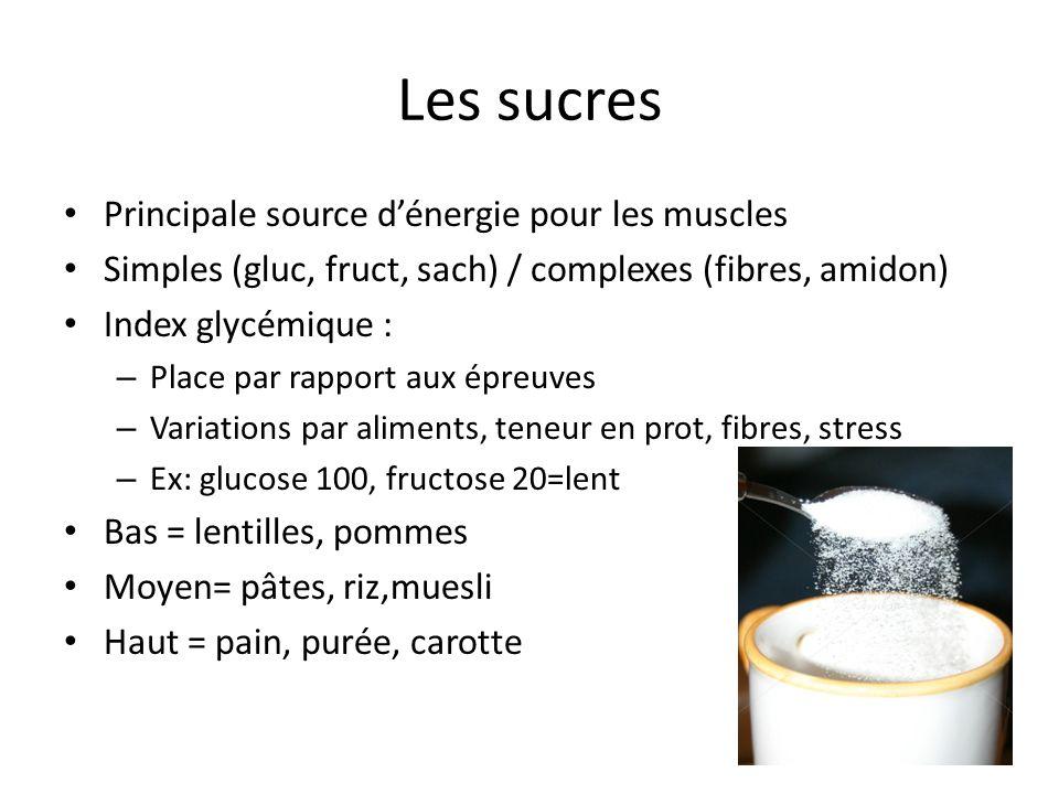 Les sucres Principale source d'énergie pour les muscles